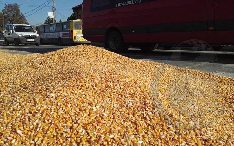 drumul-botizului-cereale-4